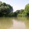 Szigetparti töltőbukó a Duna folyam 1847,1 fkm-ében a főmeder felől nézve, Rajka 2016. július 26.-án
