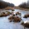 Befagyott a Nováki csatorna ami a Halászi (Arak) és Darnózseli községek közigazgatási határán is végig húzódik, 2017 január 31 (2)