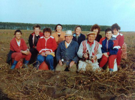Krumpliszedés az 1980-a években