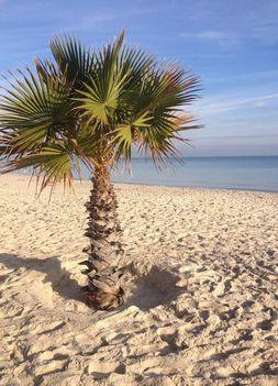 pálma Tunézia