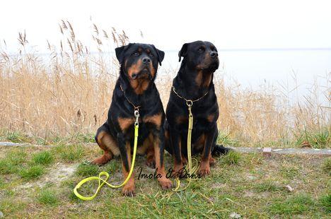 Imola & Daniboy a Fertő-tónál