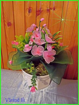 rózsaszín fokföldi ibolya