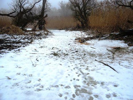 Túra a befagyott Öregszigeti belső tó jegén, Kisbodak 2017. február 03.-án 38