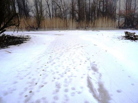 Túra a befagyott Öregszigeti belső tó jegén, Kisbodak 2017. február 03.-án 42