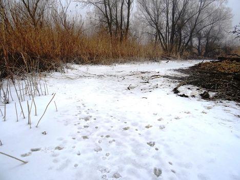 Túra a befagyott Öregszigeti belső tó jegén, Kisbodak 2017. február 03.-án 44