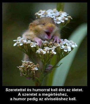 szeretet-humor