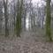 Tavaszi erdő
