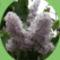 Virágaim. 1