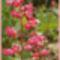 Virágaim. 2