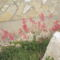 virágok 042