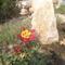 virágok 063
