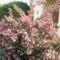 virágok 076