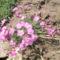 virágok 106