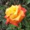 virágok 126