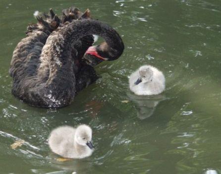 A kis család