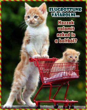 cica-