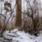 Intenzív hódrágás a  befagyott Duna-ág mellett, Szigetköz 2017. február 02.-án