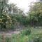 kertünk 2009 május 001