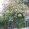 kertünk 2009 május 003