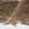 Lajta Összekötő csatorna bal parti (Országhatár felőli) töltés a torkolat felett 40 m-el, a hódok léket vágtak a töltéslábnál lévő üregük felé, Hegyeshalom 2017. január 26.-án