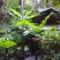 esőerdőben