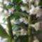 Nőnapi orhideám