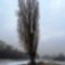 Befagyott_a_lajta_fomeder_a_stulcz_ferenc_jegenyefanal_2017_januar_26an-001_2027747_5949_s
