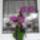 Egyedi_kezzel_keszult_horgolt_orchidea_7_2027511_9218_t