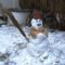 Hóember a Márialiget gátőrház udvarán, Hegyeshalom 2017. január 27.-én 1