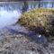A Mosoni-Duna kisvizes időszakokban erőteljesen megcsapolja a térségi talajvizet Lickópusztánál, Mecsér 2017. február 10.-én 1
