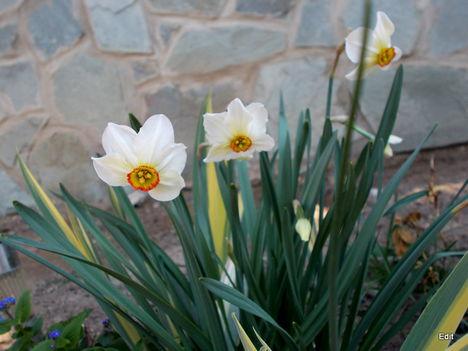 Most nyíló virágaim 1
