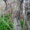 Visszavárja a madárpárokat az áttelelt madárfészek, Szigetköz 2017. március 29.-én