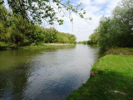 Mosoni-Duna folyó a Cvika Camping melletti szakaszon, Kimle 2017. április 11.-én 3