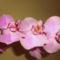 Orchidea-006_2002460_2498_s