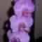 Orchidea-007_2002461_8741_s