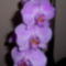 Orchidea-008_2002466_3472_s