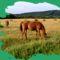 Csodálatos lovak. 2