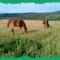 Csodálatos lovak. 4