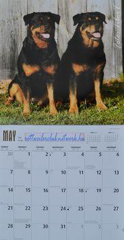 Rottweiler - MÁJUS
