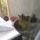 Bagoly_az_erkelyen-003_232122_52378_t