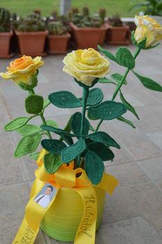 Sárga rózsa ballagásra