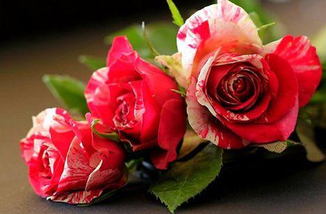 A virágok szavak nélkül beszélnek.