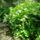 Szigetköz növényei