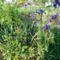 Virágok a kerítés mellett