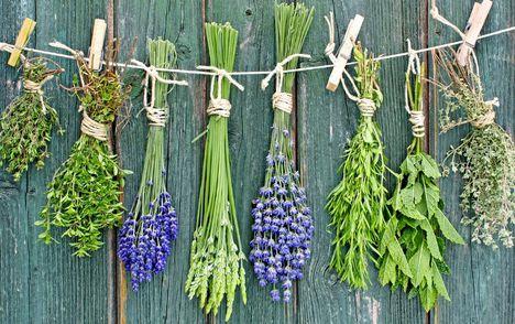 gyógynövények 2