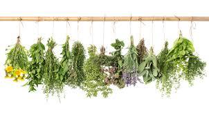 gyógynövények 3