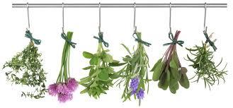 gyógynövények 4