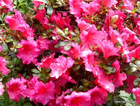 Most nyíló virágaim 3