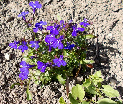 Most nyíló virágaim 4