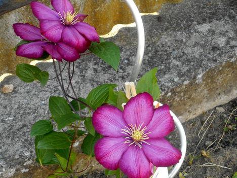 Most nyíló virágaim 5
